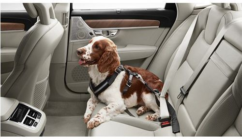 Genuine Volvo Dog Harness (Size: Small, Less than 15kg)